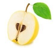 Το μισό από το ώριμο Apple-κυδώνι με το φύλλο που απομονώνεται Στοκ Εικόνες
