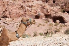 Το μοναστήρι αγγελία-Deir, αρχαία πόλη Petra, Ιορδανία Nabataean Αρχαίος ναός στη Petra Στοκ φωτογραφία με δικαίωμα ελεύθερης χρήσης