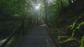 Το μονοπάτι για βάδισμα με το κιγκλίδωμα στο δάσος φιλμ μικρού μήκους