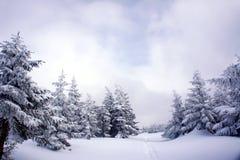 Το μονοπάτι για βάδισμα που θάβεται κάτω από το χιόνι Στοκ φωτογραφίες με δικαίωμα ελεύθερης χρήσης