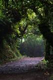 Το μονοπάτι για βάδισμα στο δάσος σύννεφων Στοκ Εικόνες