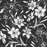 Το μονοχρωματικό floral άνευ ραφής σχέδιο με το χέρι που σύρεται ανθίζει daffodils, νάρκισσοι διανυσματική απεικόνιση