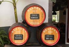 Το μουσείο - αποθήκευση του ακριβού εκλεκτής ποιότητας κρασιού Madera Στοκ Εικόνες