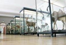 Το μουσείο Senckenberg Στοκ Φωτογραφίες