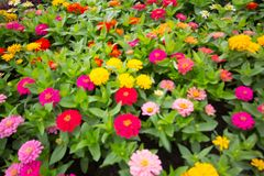 Το μουτζουρωμένο υπόβαθρο των ζωηρόχρωμων λουλουδιών στο πάρκο Στοκ Εικόνες