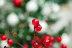 Το μούρο Χριστουγέννων επάνω το υπόβαθρο Στοκ Εικόνες