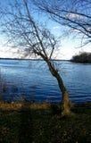 Το μπλε λευκό αντέχει τη λίμνη στοκ φωτογραφία με δικαίωμα ελεύθερης χρήσης