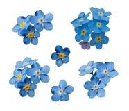 Το μπλε με ξεχνά όχι λουλούδια άνοιξη Διακοσμητικό διανυσματικό σύνολο στοιχείων διανυσματική απεικόνιση