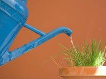 το μπλε μπορεί ποτίζοντα&sigma στοκ φωτογραφία με δικαίωμα ελεύθερης χρήσης