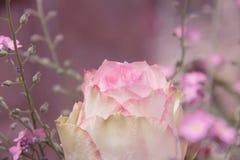 Το μπουμπούκι τριαντάφυλλου και forgetmenot τα λουλούδια, οδοντώνουν τονισμένος Στοκ φωτογραφία με δικαίωμα ελεύθερης χρήσης
