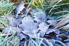 το μπλε ανασκόπησης αφήνει το δρύινο ουρανό Στοκ Εικόνες