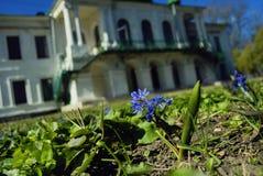Το μπλε ελατήριο ανθίζει κοντά σε έναν Λευκό Οίκο δύο-ιστορίας Στοκ φωτογραφία με δικαίωμα ελεύθερης χρήσης