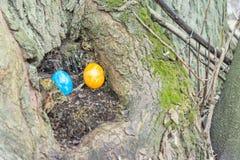 Το μπλε και κίτρινο αυγό Πάσχας είναι κρυμμένο σε έναν κορμό δέντρων Στοκ Φωτογραφία