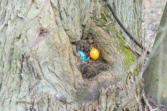 Το μπλε και κίτρινο αυγό Πάσχας είναι κρυμμένο σε έναν κορμό δέντρων Στοκ Φωτογραφίες