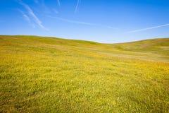 το μπλε πεδίο ανθίζει το καλοκαίρι ουρανού λιβαδιών χλόης κάτω Στοκ Εικόνες
