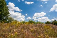 το μπλε πεδίο ανθίζει το καλοκαίρι ουρανού λιβαδιών χλόης κάτω στοκ φωτογραφία με δικαίωμα ελεύθερης χρήσης