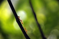 Το μυρμήγκι παίρνει τη συνεδρίαση Στοκ Εικόνες