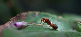 Το μυρμήγκι Στοκ φωτογραφίες με δικαίωμα ελεύθερης χρήσης