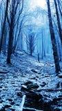 Το μυστήριο ενός δάσους Στοκ φωτογραφίες με δικαίωμα ελεύθερης χρήσης