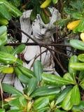 Το μυστικό άγαλμα Στοκ φωτογραφία με δικαίωμα ελεύθερης χρήσης