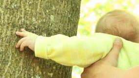 Το μωρό λίγων μηνών σε ετοιμότητα πατέρων που έρχεται σε επαφή με με τη φύση - σχετικά με το δέντρο και εξετάζει το βίντεο ζουμ ε απόθεμα βίντεο