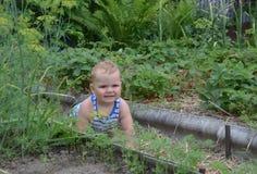 Το μωρό σέρνεται μεταξύ των αυξημένων κρεβατιών στον κήπο Στοκ εικόνα με δικαίωμα ελεύθερης χρήσης