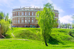 Το μόνο δέντρο σημύδων Στοκ εικόνες με δικαίωμα ελεύθερης χρήσης