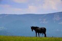 Το μόνο μαύρο άλογο στοκ φωτογραφίες