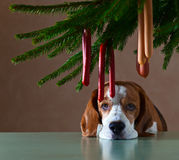 Το μόνο σκυλί Στοκ Εικόνες