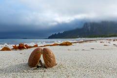 Το μύδι στην όμορφη αμμώδη παραλία Στοκ Εικόνα