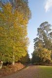 Το νέο δάσος στοκ φωτογραφία με δικαίωμα ελεύθερης χρήσης