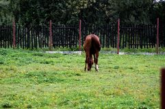 Το νέο άλογο Στοκ Εικόνα