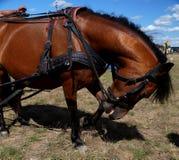 Το νέο άλογο Στοκ Φωτογραφίες