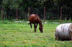 Το νέο άλογο Στοκ Εικόνες