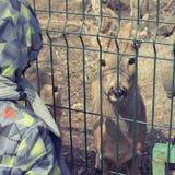 Το νέο ελάφι ζει σε ένα κλουβί στο ζωολογικό κήπο στοκ φωτογραφίες