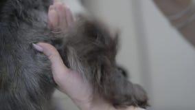 Το νέο επαγγελματικό κατοικίδιο ζώο groomer ξεραίνει την τρίχα του ποδιού του σκυλιού μετά από την πλύση κίνηση αργή κλείστε επάν φιλμ μικρού μήκους