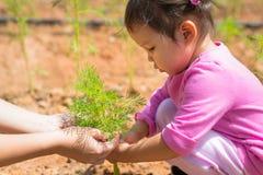 Το νέο κορίτσι καθοδηγείται στο πώς να φροντίσει για τις εγκαταστάσεις σε ένα αγρόκτημα στοκ φωτογραφία