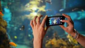Το νέο κορίτσι παίρνει τα ψάρια φωτογραφιών στο ενυδρείο Κρατά το τηλέφωνό της και παίρνει τις φωτογραφίες απόθεμα βίντεο