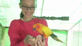 Το νέο κορίτσι ταΐζει το βίντεο μήκους σε πόδηα αποθεμάτων παπαγάλων lovebird φιλμ μικρού μήκους