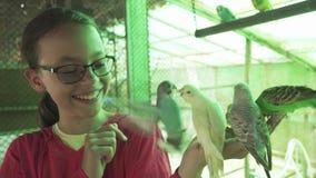 Το νέο κορίτσι ταΐζει το κυματιστό βίντεο μήκους σε πόδηα αποθεμάτων παπαγάλων φιλμ μικρού μήκους