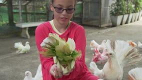 Το νέο κορίτσι ταΐζει τα διακοσμητικά περιστέρια με το πολύχρωμο βίντεο μήκους σε πόδηα αποθεμάτων φτερών απόθεμα βίντεο