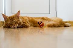 Το νέο κόκκινο παιχνίδι γατών και έπεσε κοιμισμένο στο πάτωμα κοντά στο παιχνίδι της Στοκ Φωτογραφία