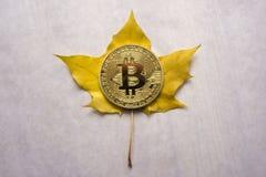 Το νέο λαμπρό ασημένιο νόμισμα bitcoin με το σύμβολο golder bitcoin Β σε χρυσό ακτινοβολεί υπόβαθρο με το διάστημα αντιγράφων Στοκ φωτογραφία με δικαίωμα ελεύθερης χρήσης