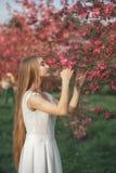 Το νέο ξανθό κορίτσι απολαμβάνει το ανθίζοντας κεράσι στον κήπο βραδιού Άνθιση Sakura Στοκ φωτογραφία με δικαίωμα ελεύθερης χρήσης