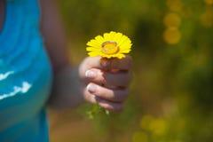 Το νέο όμορφο ξανθό κορίτσι σε έναν chamomile τομέα στέκεται με ένα λουλούδι στα χέρια της στοκ φωτογραφία με δικαίωμα ελεύθερης χρήσης