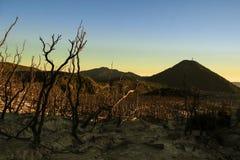 Το νεκρό δάσος στο υποστήριγμα Papandayan Στοκ Φωτογραφίες