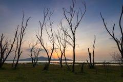 Το νεκρό δέντρο με το ηλιοβασίλεμα Στοκ εικόνα με δικαίωμα ελεύθερης χρήσης