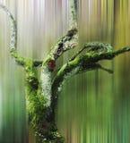 Το νεκρό δέντρο στη θαμπάδα κινήσεων Στοκ εικόνα με δικαίωμα ελεύθερης χρήσης