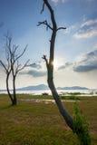 Το νεκρό δέντρο Στοκ Φωτογραφία