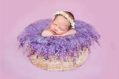 Το νεογέννητο κορίτσι σε ένα στεφάνι των μαργαριτών Στοκ Εικόνες